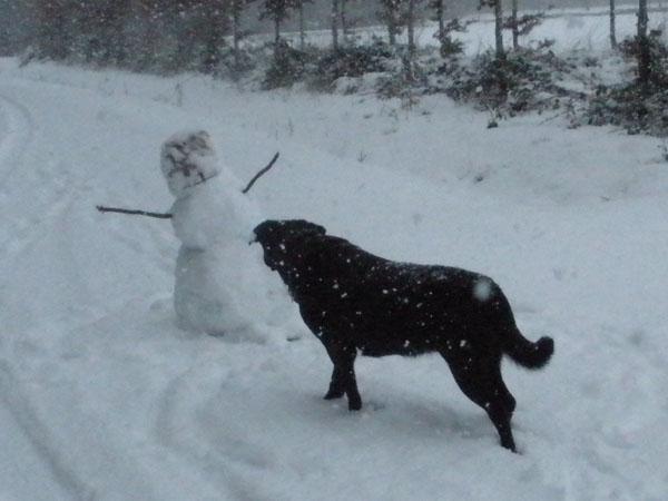 chien1.jpg